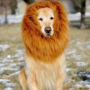 Pet Costume Lion Mane Wig For Dog Halloween Festival Fancy Dress Up 2 Colors
