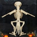 Skeleton Raven Animal Skeletons for Halloween Decorations